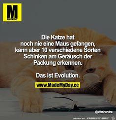 funpot: evolution.jpg von Renilinz