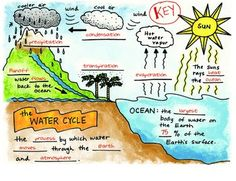 """FREE adorable """"Water Cycle Foldable"""" plus Vocabulary Sheets, FREE by Science Doodles! Science Fair, Science Lessons, Science Education, Teaching Science, Science For Kids, Science Activities, Physical Science, Weather Activities, Science Experiments"""