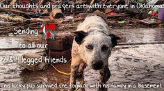 Oklahoma tornado, hurricane, wreckage, rain, flooding, lost dog, sad, oklahoma, dog, dogs, lost, missing, family