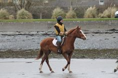 Sahara at the beach. #loveirishhorses #horseforsale #Galway #Ireland For more information email coopershilllivery@gmail.com