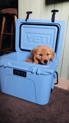 Facts On The Devoted Golden Retriever Pup Health Cute Dogs And Puppies, I Love Dogs, Puppy Love, Doggies, Small Puppies, Cute Baby Animals, Animals And Pets, Funny Animals, Cute Creatures