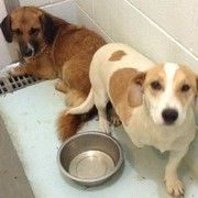 """Six dogs in danger: Carroll County Animal Shelter in Carrollton, KY ccas2002@gmail.com 502-732-6040  """"Tammie Crawford, the director of animal support for the facility, is begging for help for the six dogs who were turned over to the facility with Russell. Though Russell exhibited the most terror, the other dogs are frightened as well."""" ~ Russell (the 1 who was 2terrified 2move)  2others R safe but 4 still need rescuing urgently. http://exm.nr/1rrSMRY"""