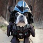 Bulldog looking hilarious in this hooded Darth Vader costume!