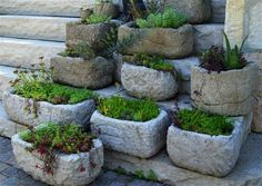 Rustic troughs of sedum and sempervivum make an inviting entranceway and this is a great way to showcase a collection.