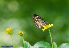 P201410-01 Close Up, Moth, Insects, Bee, Nature, Animals, Honey Bees, Naturaleza, Animales