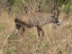 Kamerun Travel, Animals, Animales, Trips, Animaux, Viajes, Traveling, Animal, Animais