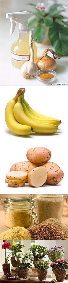 Натуральные удобрения для комнатных растений. House Plants, Banana, Fruit, Flowers, Food, Indoor House Plants, Essen, Foliage Plants, Bananas