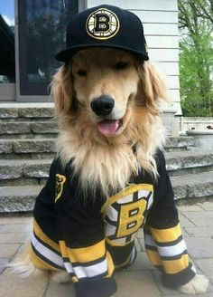 cbecf700ae2 71 Best Boston Bruins Funny images