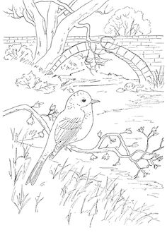T T bird in front of scene Landscape Pencil Drawings, Art Drawings Sketches, Easy Drawings, Animal Drawings, Bird Coloring Pages, Printable Adult Coloring Pages, Coloring Books, Drawing Techniques, Art Lessons