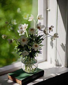 Ikebana, My Flower, Flower Vases, Flower Power, Neals Yard Remedies, Window View, Still Life, Floral Arrangements, Flower Arrangement