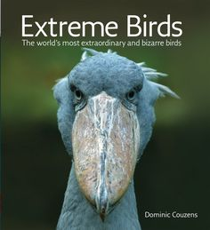 Extreme Birds: The World's Most Extraordinary and Bizarre Birds: Dominic Couzens: 9781554079520: Amazon.com: Books