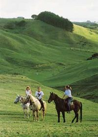 Gentle slopes and kind horses in New Zealand