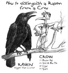 ravens vs crows - Google Search