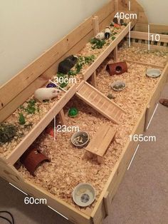Awesome Ideas for Guinea Pig Hutch and Cages Meerschweinchenstall und laufen Guinea Pig Hutch, Guinea Pig House, Pet Guinea Pigs, Guinea Pig Care, Diy Guinea Pig Toys, Hamster Toys, Pet Pigs, Indoor Guinea Pig Cage, Cages For Guinea Pigs