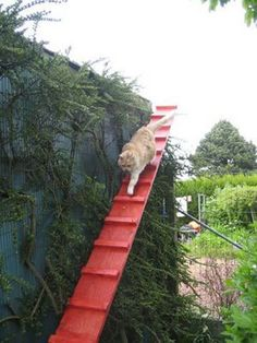 15 Beautifully Designed Cat Ladders & Stairs Around The World – Gayle Brown – Cat playground outdoor Cat Playground, Playground Design, Cat Ramp, Cat Stairs, Cat Fence, Gato Gif, Cat Shelves, Cat Enclosure, Outdoor Cats