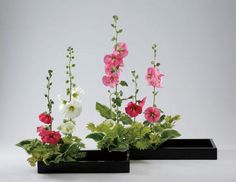 Ohara School of Ikebana Rimpa Arrangement with Hollyhock, variegated hosta, golden itaya maple