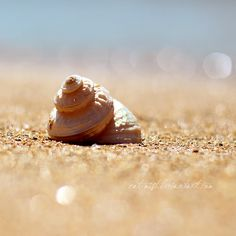 Seashore by Cat-Mist.deviantart.com on @deviantART