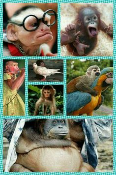 Monkeys... Funny!! :)