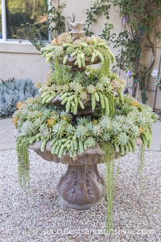 Water feature dripping with succulents