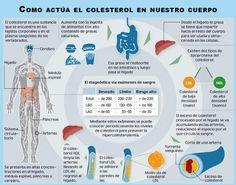 Conoce los efectos que tiene el  #colesterol en tu organismo.
