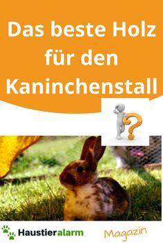 Mehr Dazu findest Du im Beitrag...jetzt lesen! Rabbit, Animals, Small Animals, Reading, Timber Wood, Bunny, Rabbits, Animales, Animaux