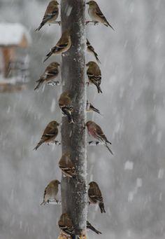 Little Birds, Winter