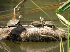 kottayam backwaters - Google Search