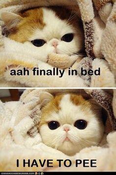 #cat #bed #pee