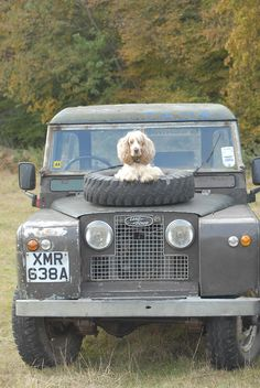 Land Rover and dog.  Not just any dog !