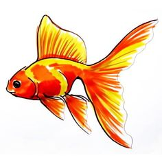 How to draw a goldfish -two step by step drawing lessons. Fish Drawing Outline, Fish Drawing For Kids, Fish Drawings, Art Drawings Sketches, Cute Drawings, Gold Fish Painting, Painting & Drawing, Drawing Drawing, Animal Sketches
