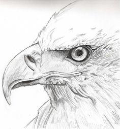 draw eagle - Google Search