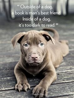 Quotes About Dogs - Dog Quotes