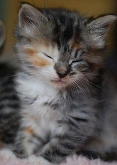 Today's most cute kitty award – what a beauty.