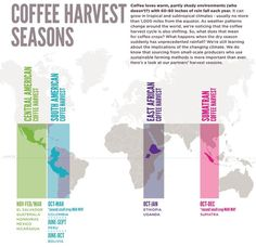 Harvest Seasons from Curtis Rosser Exchange Coffee World, Coffee Is Life, Coffee Love, Coffee Process, Coffee Origin, Best Beans, Fair Trade Coffee, Weather Change, Harvest Season