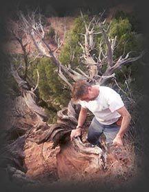 a escultura em madeira e poesia de j Christopher White (geralmente usa madeira descartada pela própria Natureza)