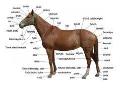 Horse Anatomy, Tarot, Horses, Animals, Animales, Animaux, Horse, Tarot Cards, Words