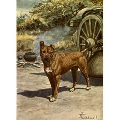 inch Canvas Print (other products available) - The hero of this popular story of a dog in Africa, narrated by sir Percy Fitzpatrick. - Image supplied by Mary Evans Prints Online - Box Canvas Print made in the USA Fine Art Prints, Framed Prints, Popular Stories, Canvas Art, Canvas Prints, Poster Size Prints, Fine Art Paper, 1000 Piece Jigsaw Puzzles, Photo Mugs