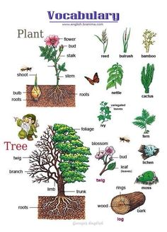 English vocabulary: Plants and Trees … English Resources, English Activities, English Tips, English Fun, English Study, English Words, English Lessons, English Grammar, Learn English