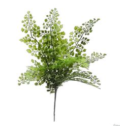 Looking for an artificial fern plant? Look no further than our stunning artificial maidenhair fern. Fern Plant, Trees To Plant, Maidenhair Fern, Plant Shelves, Autumn Garden, Live Plants, Lush Green, Artificial Plants, Ferns