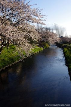 A beautiful cherry blossom scenery in Shizuoka Prefecture (April 2012).