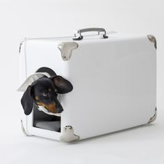 Luxury Travel doghouse