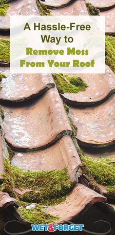 Beautify your home by removing any unsightly moss growth on your roof and exterior. Learn how here!