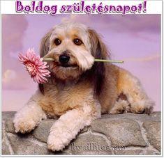 Boldog születésnapot képek Birthday Wishes, Happy Birthday, Dogs, Animals, Erika, Scrap, Blue Angels, Good Night Msg, Friendship