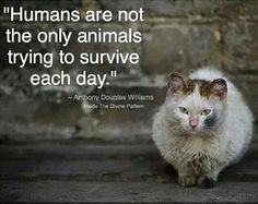 """Humans are not the only animals trying to survive each day"""