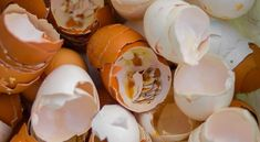 When looking for ways to cut down on kitchen waste, there are likely many solutions that come to mind before using eggshells. However, eggshells can actually be incredibly useful in a number of ways around the home and garden. Garden Bugs, Garden Pests, Cucumber Plant, Baking Soda Cleaning, Egg Tree, Small Insects, Cracked Egg, Kitchen Waste, Bloom Blossom