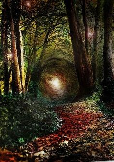 Enchanted Forest, Ireland