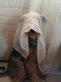 Am I invisible??.