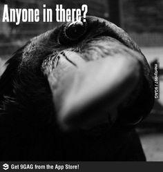 Anyone?