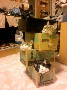 Det gäller att vara kreativ och påhittig när det kommer till DIY. Och just kreativ och påhittig är väl signifikant för katter. Här är 21 katter som är världsbäst på att göra det själv!
