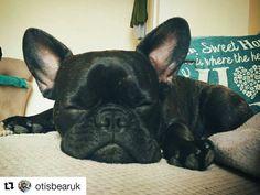 This sleeping beauty is our #woofwoofwednesday dog of the week! @otisbearuk #regram #potd #dogsofinstagram  Sleepy time!  #frenchbulldog #puppy #frenchie #dog #frenchiesofig #frenchbulldoglove #frenchbulldogsofinstagram #frenchiesofinstagram #otisthefrenchie #ears #dogsofinstagram #squishyfacecrew #puppiesofig #puppylove #sleepyhead #bulldog